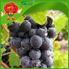 Yunnan Fresh Fruits Sweet Purple Grapes low wholesale prices