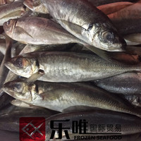 jack mackerel fish frozen big eye Trachurus japonicus