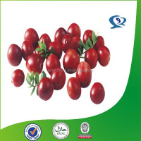 natural extrato de cranberry organic pure cranberry seed extract cranberry juice powder