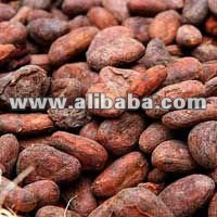 CACAO BEANS/COCOA BEANS RICH QUALITY