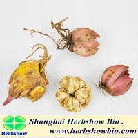High Quality Lily Flower Bulbs