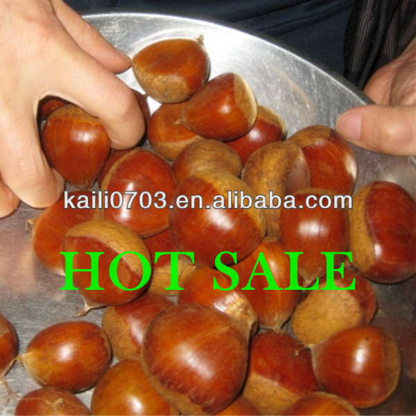 2013 chestnuts approved in high quality and best fresh chestnut quality.