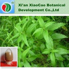 Stinging Nettle Extract,Nettle Root Extract