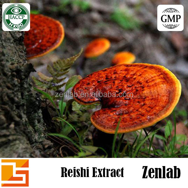 japan reishi in raw reishi mushroom for sell reishi mushroom