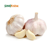 /product-detail/chinese-fresh-natural-garlic-supplied-62044210028.html