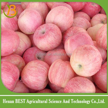 fresh star apple fruit wholesale distributors/white apple fruit/of apple fruit