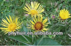 Radix Inulae/Inula Japonica Thunb Extract 0.2% Alkaloids,10:1,4:1 etc.