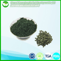 High quality protein supplements Spirulina platensis powder/ Arthrospira Platensis Cyanobacteria Extract
