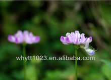 Biochanin A Red Clover Extract hot sale
