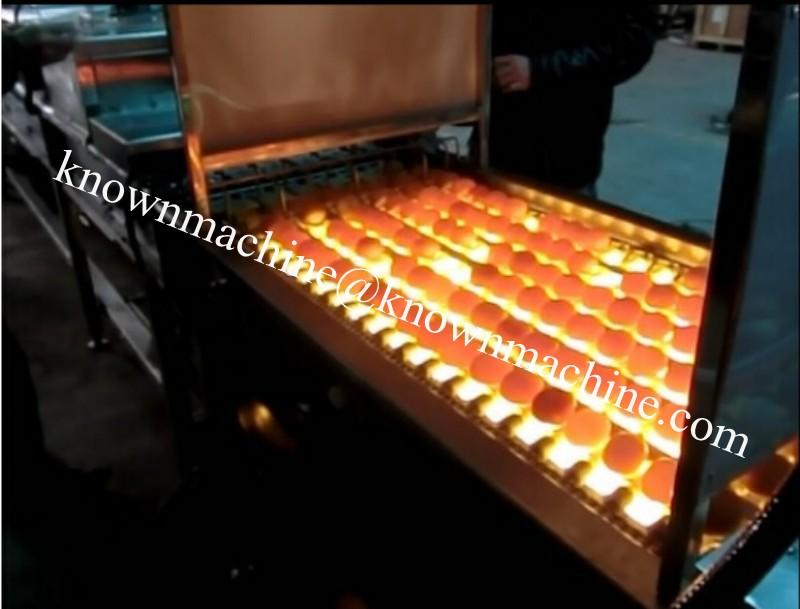 egg candling machine