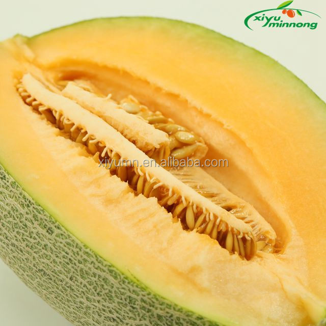 Sweet Fresh Hami Melon in Xinjiang Area