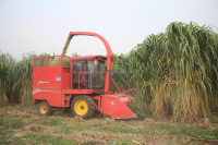 Mini forage harvester corn silage machine for sale maize stalk collector