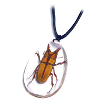Resin SD09 Clear Teardrop Real Insect Pendant Necklace Jewelry
