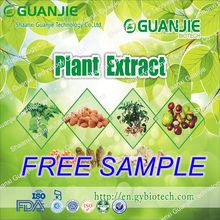 High Quality Free Sample Natural Garlic