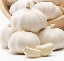 2015 fresh white garlic exporter in china