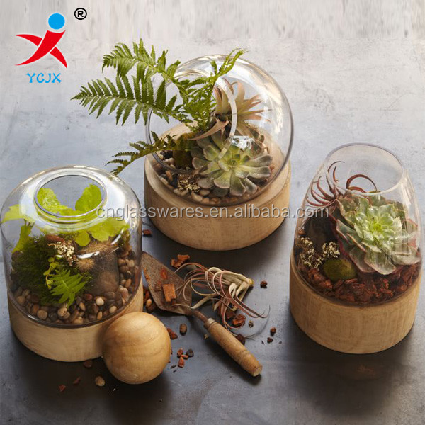 Borosilicate glass plant hole terrariums with wooden base