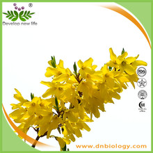 High quality Weeping Forsythia Extract 4:1~20:1 Phillyrin 0.5%-2.0% for bodybuilding supplements