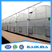 High Quality Vegetable Greenhouse Covered By Polythene Film