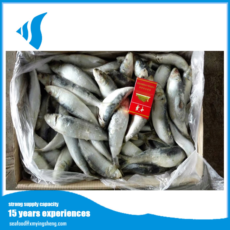 Frozen China Sardine Fish Scientific Name Sardinella Lemuru