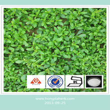 Natural and Pure stevia extract powder 90%-95 %
