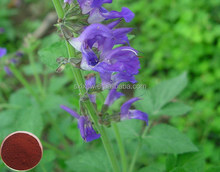 Wholesale chinese the new arrival salvia-divinorum-extract