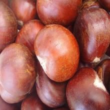 2018 new crop fresh chestnut