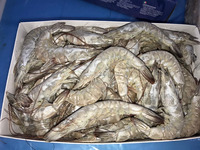 Frozen vannamei shrimp prawns prices from seafood supplier exporter