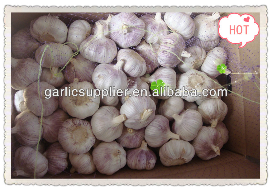 FRESH RED GARLIC CROP 2015