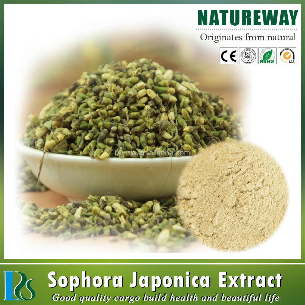 GMP Factory 95% Rutin NF-11 Sophora japonica extract powder Sophora japonica extract powder quercetin