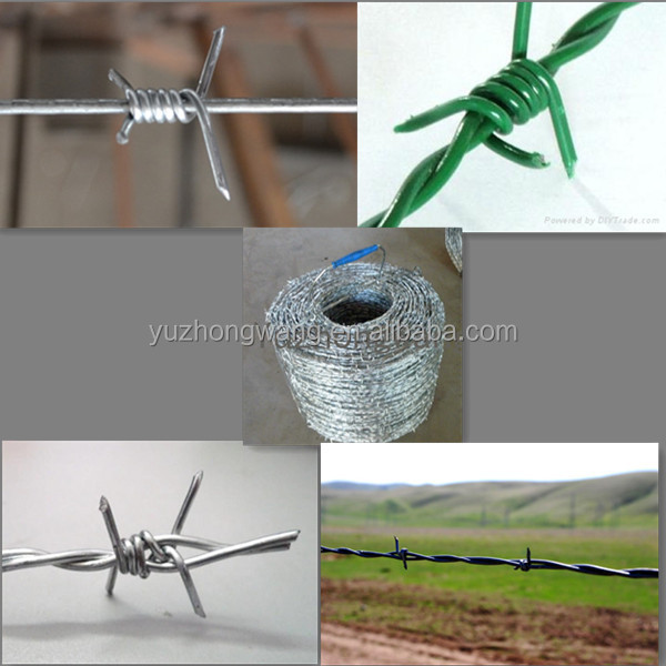 16 double twisted barbed wire for protection