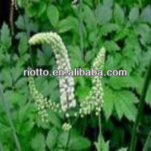 Hot sell Black Cohosh P.E.(extract) with Triterpene powder