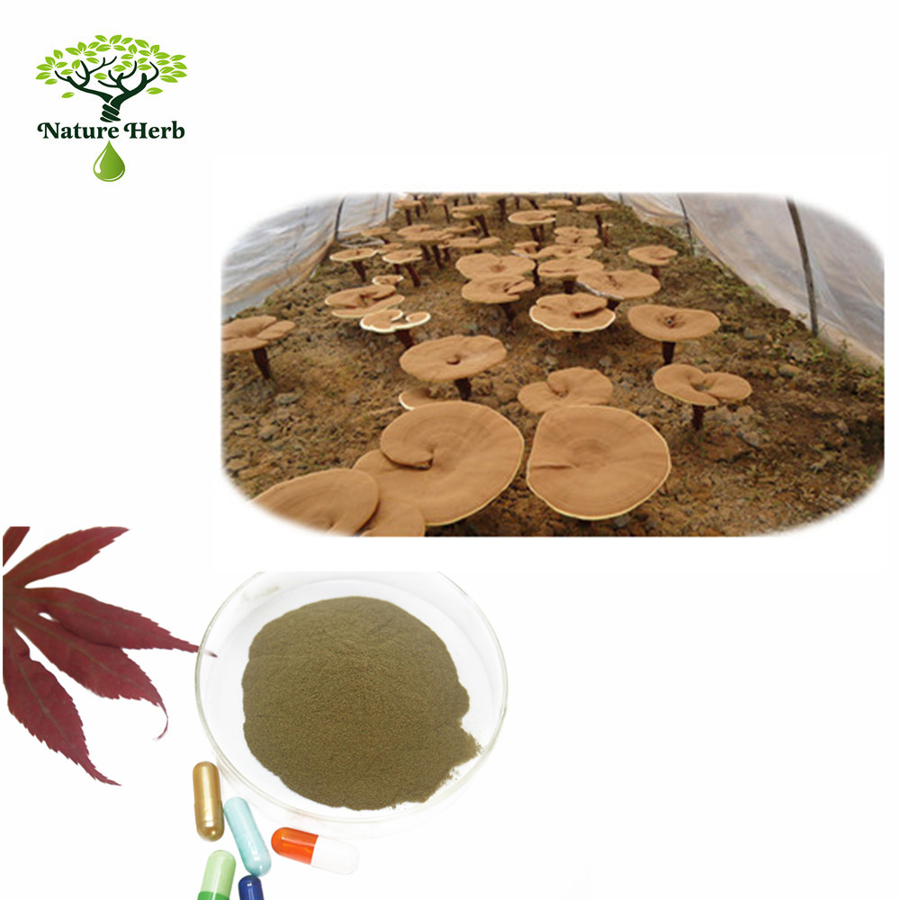 Manufacturer offer Natural Lucid Ganoderma Extract Powder/Mushroom Extract Powder