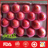 farm blush red apples sell fuji apples from china