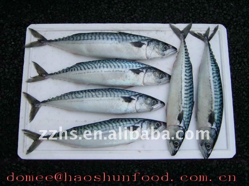 Canned Mackerel Fish Canned Fish