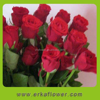 Fresh Rose High Quality real natural preserved roses For sale