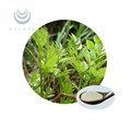 Hot sale natural Vine Tea P.E. Dihydromyricetin /Ampelopsin