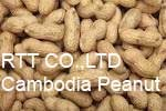 Cambodia Dried Peanut