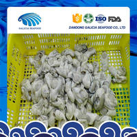 frozen fresh wholesales oyster meat with better price