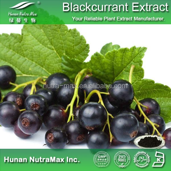 Natural Black Currant Powder , Black Currant Anthocyanins , Black Currant Extract