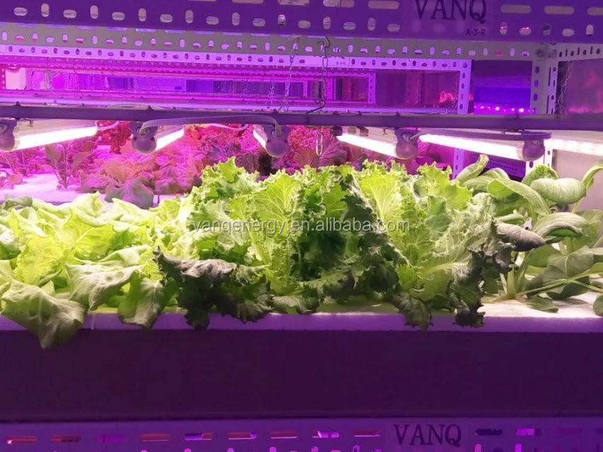 Vertical indoor hydroponic systems fodder plant growing system