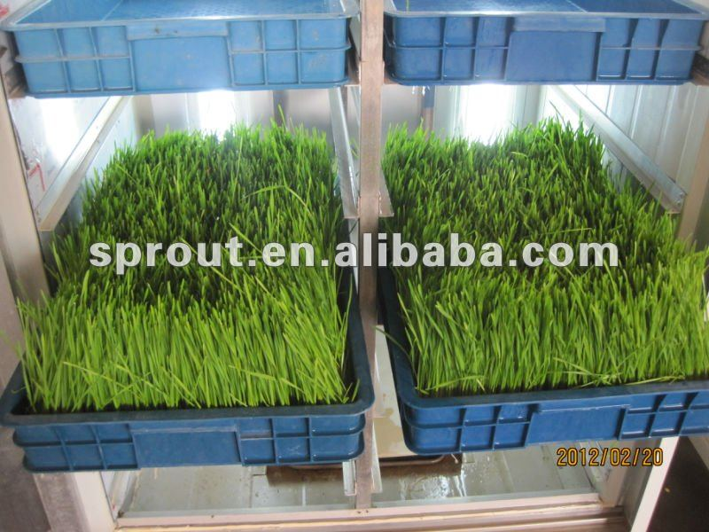 Hydroponics Animal Fodder Machine Automatic green barley sprouting machine for sale