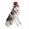Best Selling Products Nutcracker Hat Pet Accessory