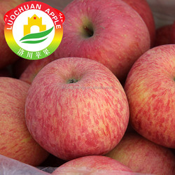 Fresh red apple whole sale price scientific name of all fruits