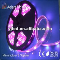 12 Volt 5050 Addressable RGB Prodrammable Flexible LED Strip