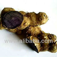 Genuine Black Ginger Kaempferia Parviflora From