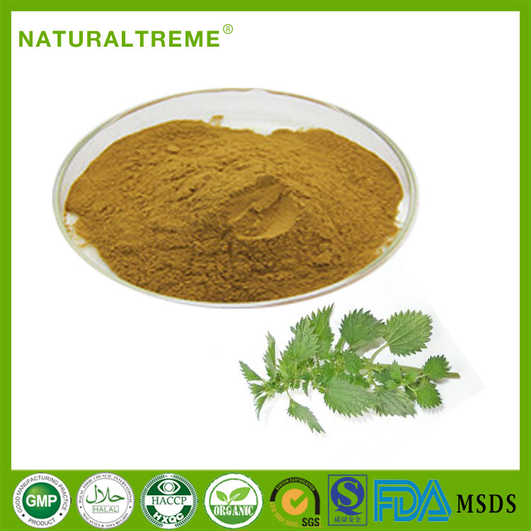 GMP Factory 100% Natural Pure Nettle Plant Extract