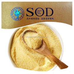 botanical slimming corn extract superoxide dismutase powder SOD enzyme ensure quality