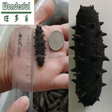 Dried sea cucumber price of dried Prickly Thorny black Spiny sea cucumber