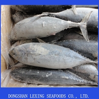 frozen whole round good quality cheap bonito