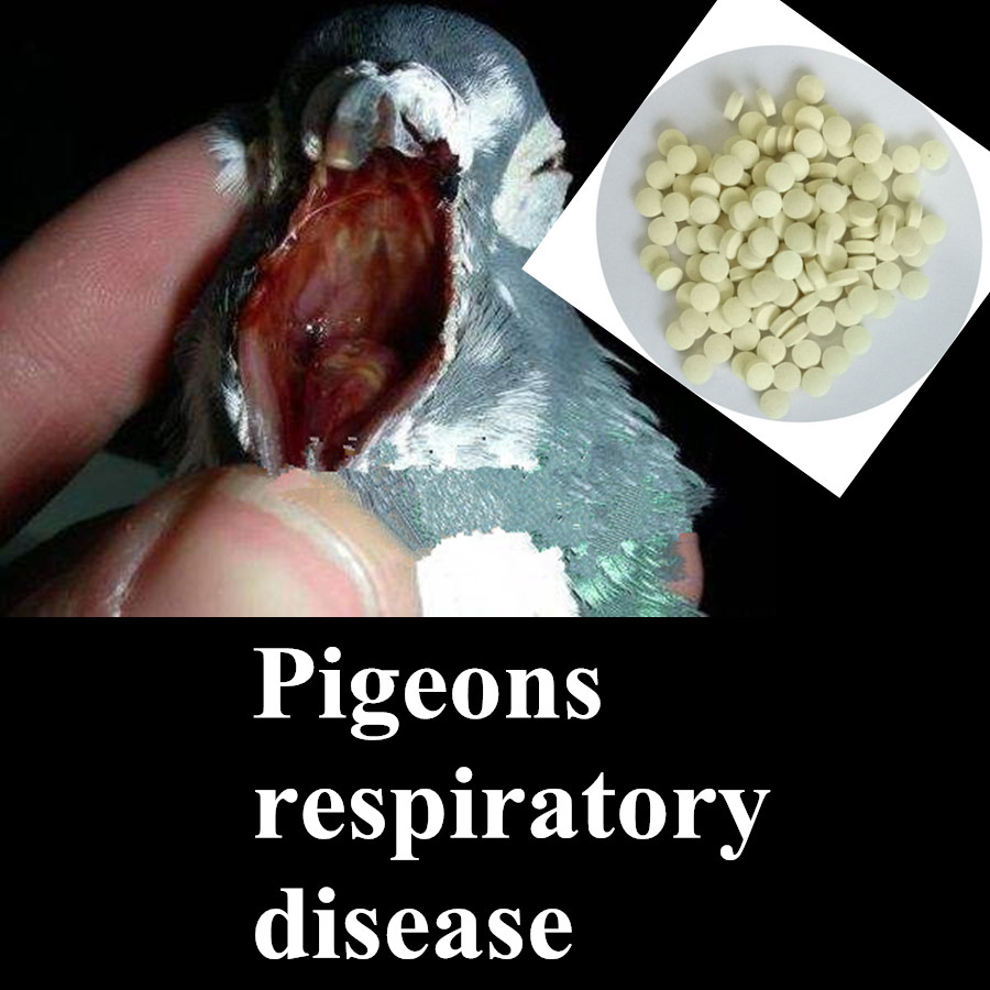 Pigeons Dedicated Doxycycline Tylosin Tartrate Medical Tablet